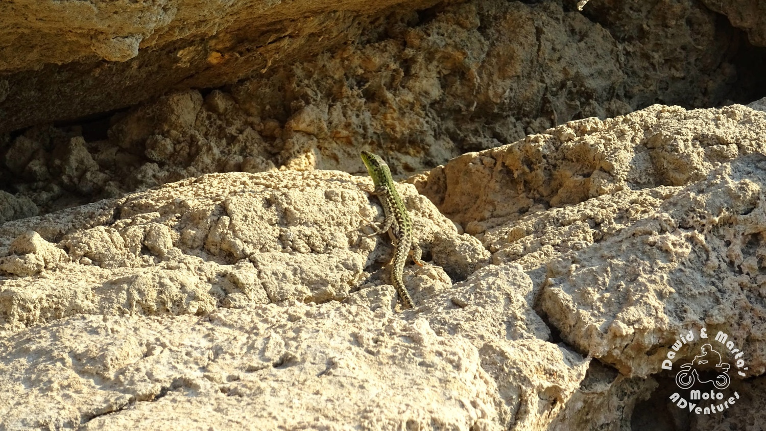 Green lizard at Peruca Lake shore