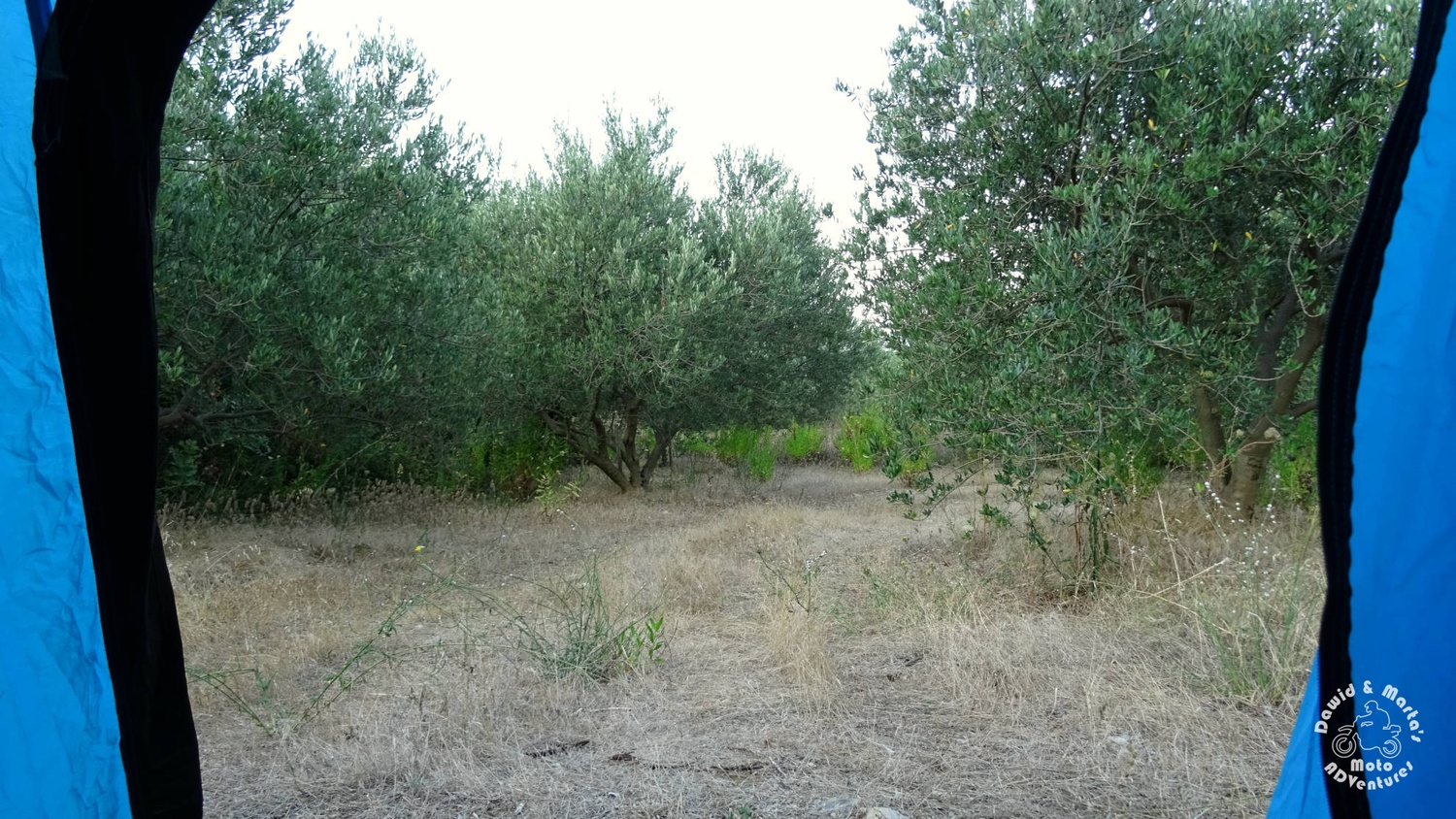 The olive grove at camping near Croatian Raba spot