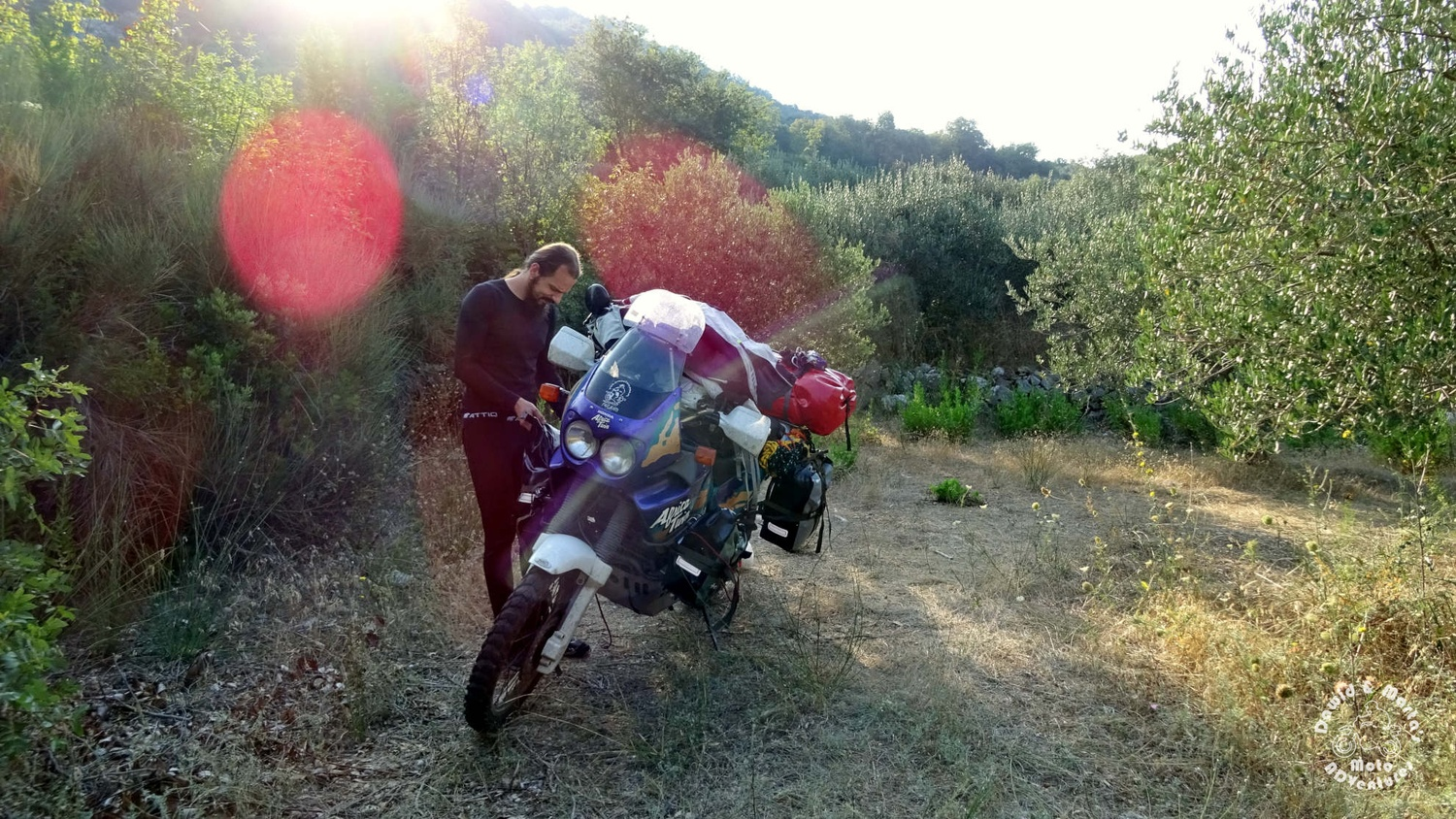 Africa Twin in the olive grove in Croatia