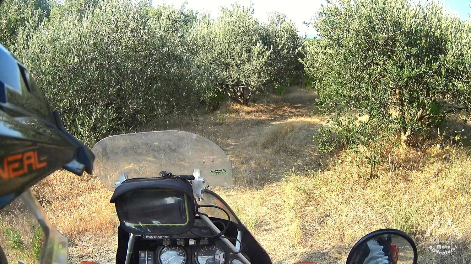 Riding the motorcycle in the olive grove