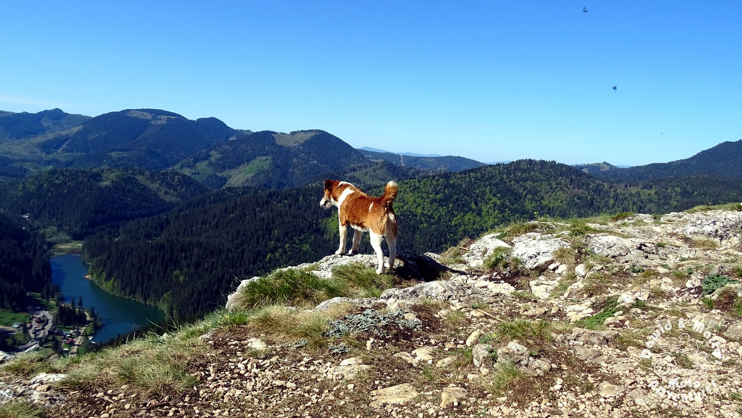 Doggy Enjoying The View